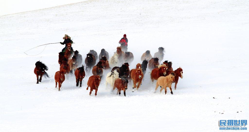 民摄世界冰雪坝上奔马摄影与金山岭长城摄影团