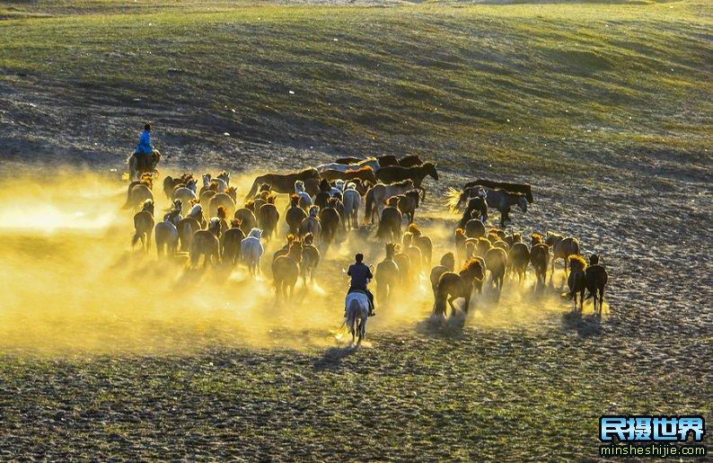 夏季坝上摄影团-6月坝上草原摄影团-坝上奔马摄影团-端午节摄影团