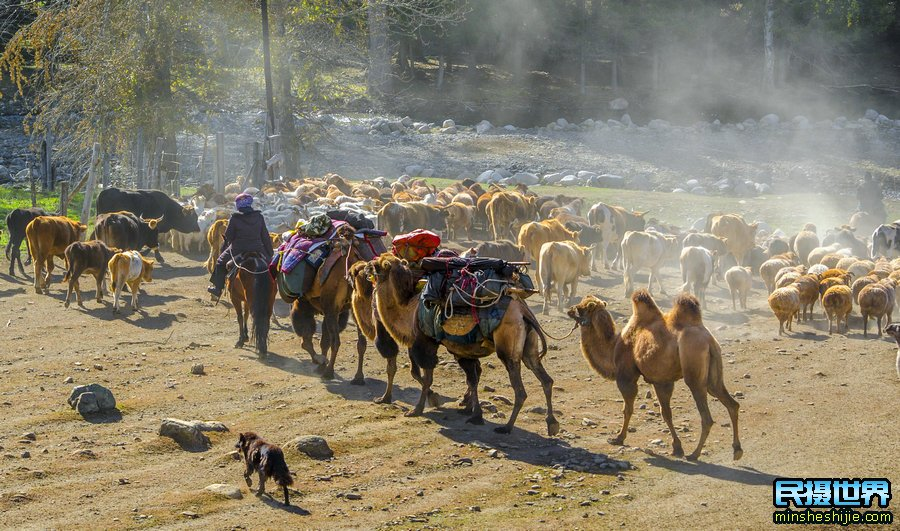 9月秋季新疆摄影团-一次金秋北疆大环线深度摄影团-一次看遍北疆秋色美景摄影团