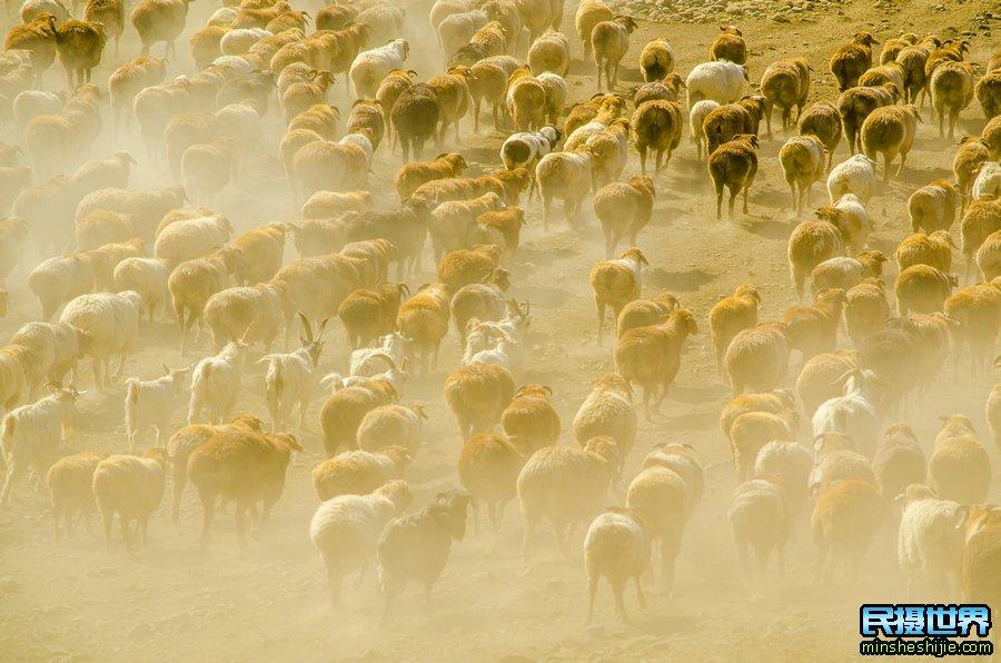 新疆牧民转场最佳时间与北疆牛羊大迁徙摄影团与采风活动开启