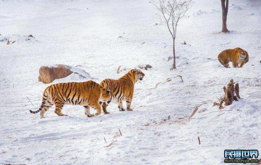 冬季东北雪乡雾凇岛长白山摄影团-一次从哈尔滨开始最美冬季摄影团