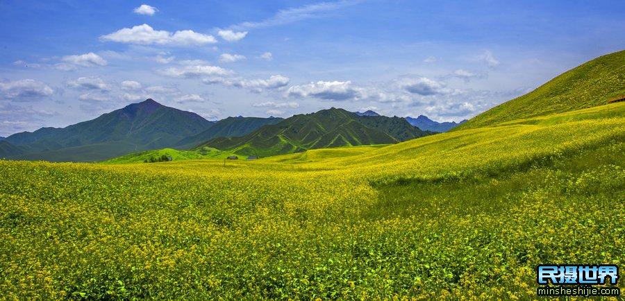 新疆摄影团 花海
