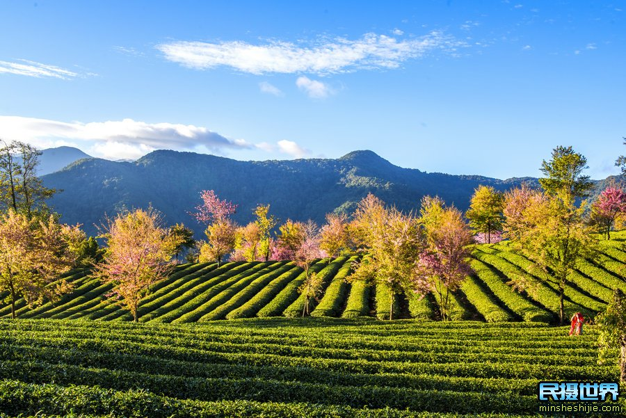 中国最美银杏与樱花摄影团--中缅边境-独龙江-丙中洛-香格里拉虎跳峡梅里雪山摄影团