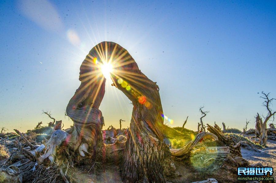 金秋额济纳胡杨摄影团-居延海-黑城-金胡杨-七彩丹霞-平山湖-黄河石林摄影团